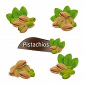 Pistachios Kernel In Nutshell With Green Leaves Set Isolated On White Background Illustration. Organ poster