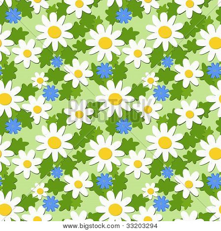 Seamless Ornament With Daisies And Knapweeds