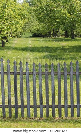 Picket fenced orchard