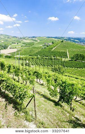 vineyars near Grinzane Cavour, Piedmont, Italy