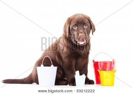 Retriever Puppy With Three Buckets On Isolated White
