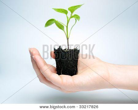 Future crop