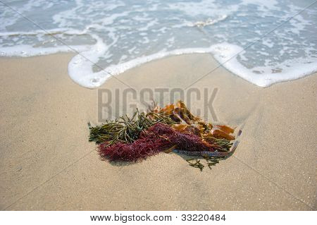 seaweed on the sandy shore