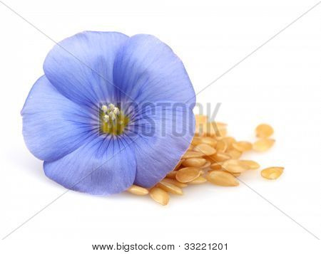 Flax seeds and flower