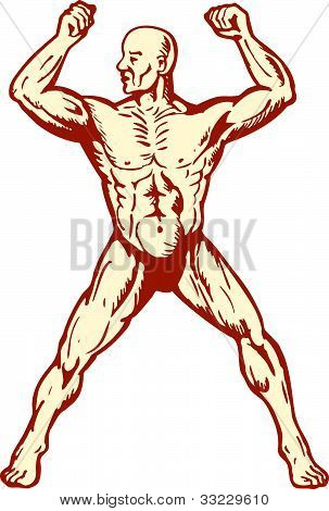 Male Human Anatomy Body Builder Flexing Muscle