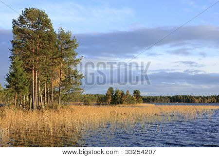 Autumn lake, reed and forest.