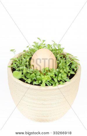 Spring Vegetable With Easter Egg In Ceramic Pot