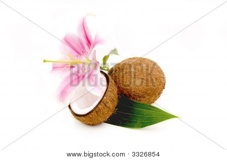 Lilly Flower And Coconuts