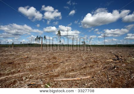 Destruction Forest Felling Of Natural Forest