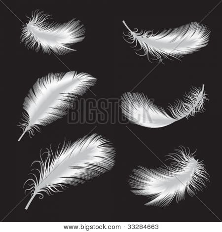 vector illustration of feather