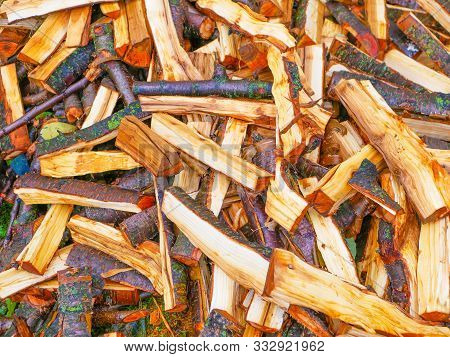 poster of Freshly Cut Tree Logs. Cut Pine Logs. Close-up. Firewood For The Winter. Bouquet Of Many Fresh Logs.