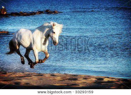 White Horse Running On Beach