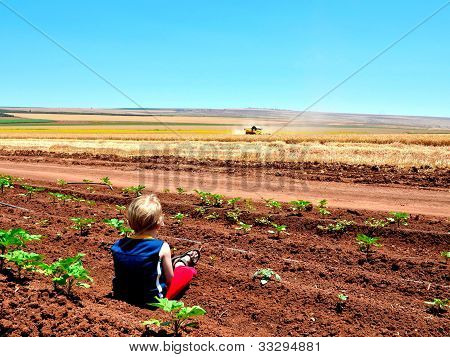 Boy Watching Harvesting