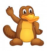 image of platypus  - Illustration of a platypus on white  - JPG