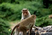 Cute Monkeys With Family. Monkey Closeup. Monkeys Living In The Wild. poster