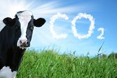 Intensive Breeding Of Cows And Co2 Emissions poster