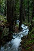 Limekiln Creek Rushes Through Forest In Pacific Northwest Forest poster