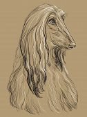 Afghan Hound Dog Vector Hand Drawing Illustration In Black And White Colors Isolated On Beige Backgr poster