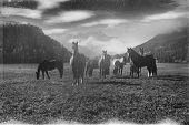 Horses In Silvaplana, Retrography Film. poster