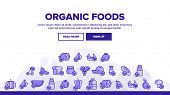 Organic Foods Vector Thin Line Icons Set. Organic Food, Fresh Fruits, Berries, Vegetables Linear Pic poster