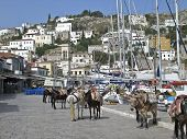 foto of jack-ass  - View of a harbor with donkeys standing on a stone street on the Island of Hydra - JPG