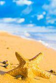 picture of starlet  - Sea Starlet Five Beams - JPG