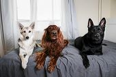 Calm Dogs Guarding Bed Of Master At Home poster