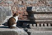 Постер, плакат: Кошка античный город