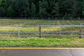 Artiodactyla Pasture Fenced By A Wooden Fence On The Side Of The Road Near An Asphalt Road With Yell poster