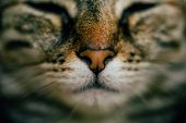 Close Up View Of Sleeping Cat With Selective Focus. European Cat Portrait. Portrait Of Beautiful Cat poster