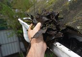 Roofer Cleaning House Rain Gutter From Leaves And Dirt In Autumn With Hands. Roof Gutter Cleaning Gu poster