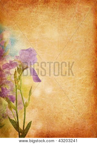 Vintage Background With Iris