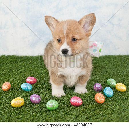 Easter Corgi Puppy