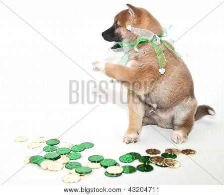 Greedy  St. Patrick's Day Puppy
