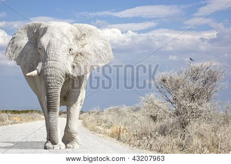 Elefante Road