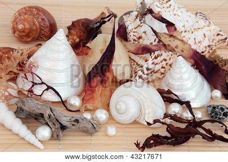 Seashell and seaweed selection with driftwood, natural sponge, pumice stone and pearls over bamboo background.