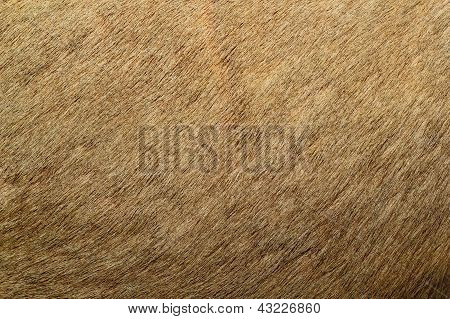 Red Deer Textured Fur