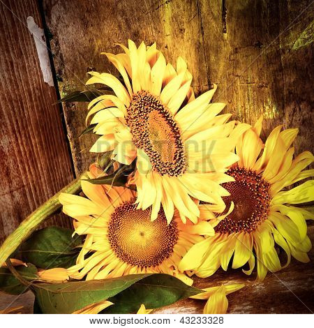 Vintage close-up image of three sunflowers with a grunge rustic wood planks background