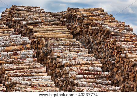 Big Pile Of Logs