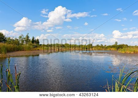 Small lake in nice summer day