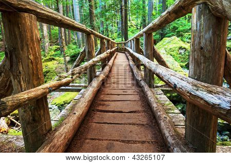 boardwalk in forest