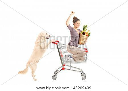 White retriever dog pushing a woman in a shopping cart isolated on white background