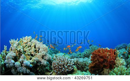 Recifes de corais debaixo d'água no Oceano