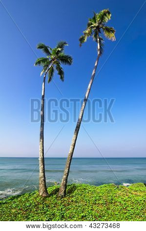 Beautiful Tropical Landscape With Ocean Beach And Palm Trees Under Blue Sky