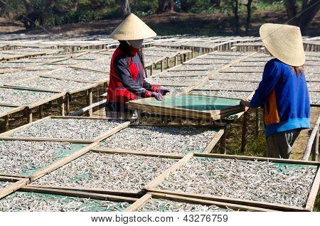 Sol de secagem de anchovas