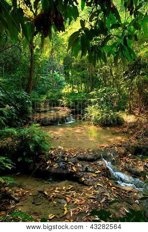 Tropical Water Source