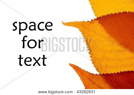 Autumn Leaf With Space For Text
