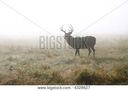 Buck In Misty Meadow