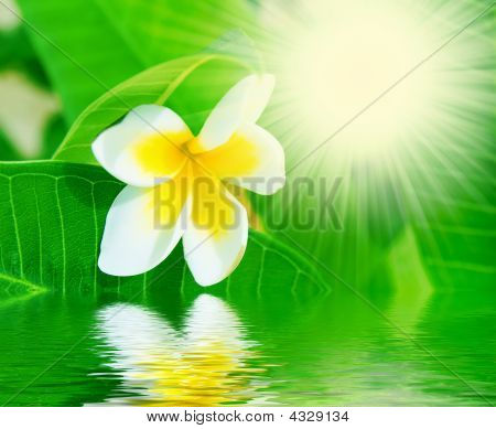Flower, Water And Sunbeams