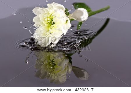 White Flower Fall In Water